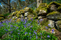 Hardcastle Crags, Hebdon Bridge, Spring, Bluebell, Blubells, Flowers