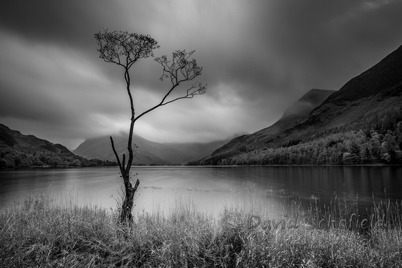 The Lone Tree, Buttermere